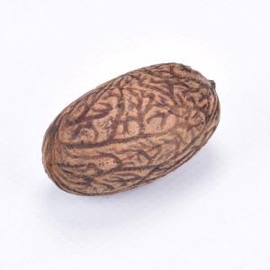 Uxi Nuss Samen ca. 3-5 cm, 1 Stück
